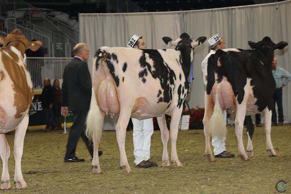 Royal16_Holstein_1M9A0572