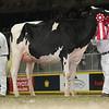 Royal16_Holstein_L32A4281