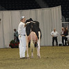 Royal16_Holstein_1M9A0468