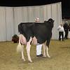 Royal16_Holstein_1M9A0598