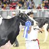 Royal16_Holstein_L32A4442
