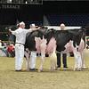 Royal16_Holstein_L32A4406