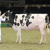 Royal16_Holstein_L32A4488