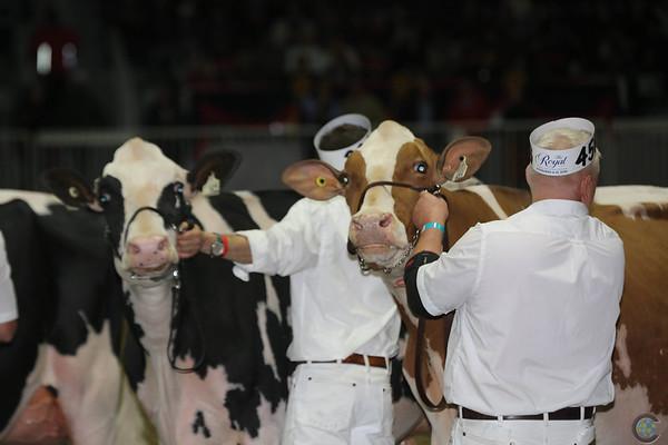 Royal16_Holstein_L32A4338