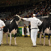 Royal16_Holstein_1M9A0675