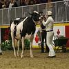 Royal16_Holstein_L32A4191
