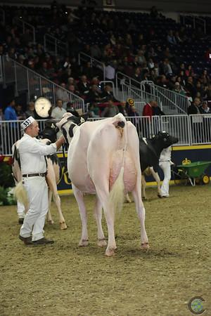 Royal16_Holstein_L32A4485