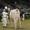 Royal16_Holstein_L32A4485