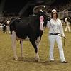 Royal16_Holstein_1M9A0437