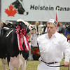 Royal16_Holstein_L32A4269
