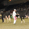 Royal16_Holstein_1M9A0568