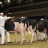Royal16_Holstein_1M9A0666