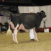 Royal16_Holstein_1M9A0601