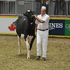 Royal16_Holstein_L32A4360