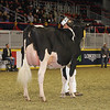 Royal16_Holstein_1M9A0466