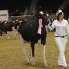 Royal16_Holstein_1M9A0434