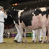 Royal16_Holstein_1M9A0805
