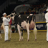 Royal16_Holstein_1M9A0462