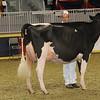Royal16_Holstein_1M9A0586