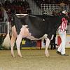 Royal16_Holstein_1M9A0587