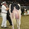 Royal16_Holstein_L32A4201