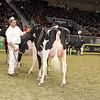 Royal16_Holstein_1M9A0382
