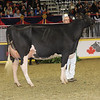 Royal16_Holstein_1M9A0577
