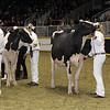 Royal16_Holstein_1M9A0792