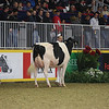 Royal16_Holstein_L32A4306