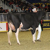 Royal16_Holstein_1M9A0569