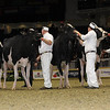 Royal16_Holstein_1M9A0679