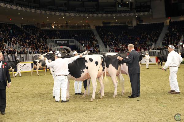 Royal16_Holstein_1M9A0401