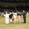 Royal16_Holstein_1M9A0401