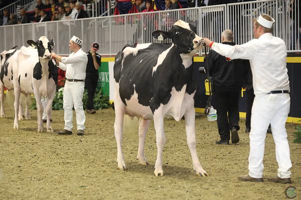 Royal16_Holstein_1M9A0762