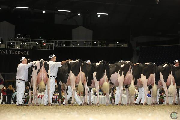 Royal16_Holstein_L32A4221
