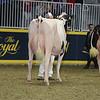 Royal16_Holstein_L32A4487
