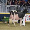 Royal16_Holstein_L32A4475