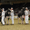 Royal16_Holstein_1M9A0682