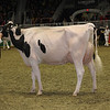 Royal16_Holstein_1M9A0784