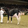 Royal16_Holstein_1M9A0632