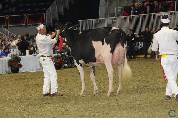 Royal16_Holstein_1M9A0729