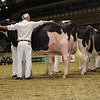 Royal16_Holstein_1M9A0662