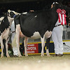 Royal16_Holstein_L32A4389