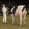 Royal16_Holstein_1M9A0756