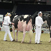 Royal16_Holstein_L32A4492