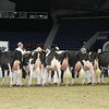 Royal16_Holstein_L32A4252