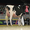 Royal16_Holstein_L32A4287