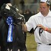 Royal16_Holstein_L32A4271