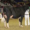 Royal16_Holstein_1M9A0741