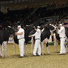 Royal16_Holstein_1M9A0686